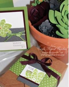 Paper-Succulent-Garden-Gift-Set-SP-239x300