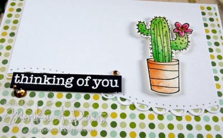 CactusThinkingofYoucloseup